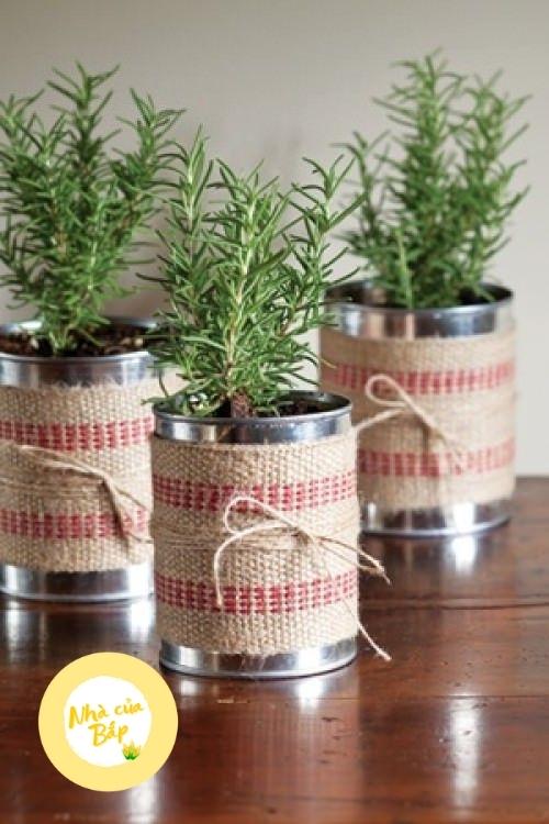 Cách trồng cây Hương Thảo